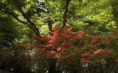 Ishiyama-dera_01
