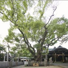 Ishikiri_899